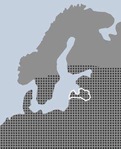 zilganā balanda - Chenopodium glaucum L. - Augi - Latvijas daba