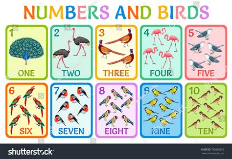 Children Cards Numbers Birds Kids Learning Stock Vector