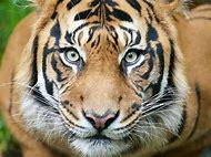 Wild Zoo Animals