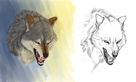 drawn wolf angry pencil   color drawn wolf angry
