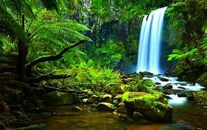 History  The Amazon Jungle