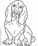 Coloring Dog Basset Pages Hound Adult sketch template