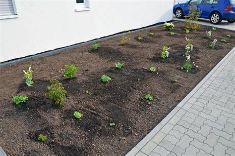Vorgarten Pflanzen Vervollständigt Und Gemulcht