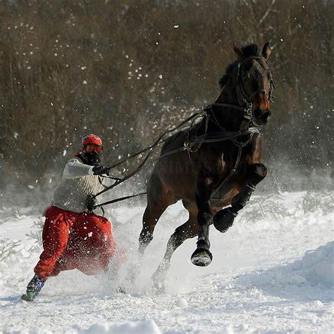 andalusian horse arab horses arabian wojtek breed