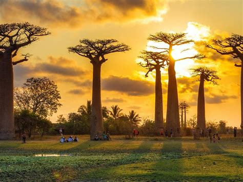 avenue   baobabs luxury trips