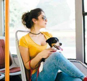 legge sull ingresso dei cani nei luoghi pubblici dove puoi entrare con il tuo divieto di ingresso ed