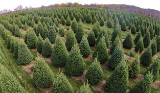 integrated pest management ipm for christmas tree production farming