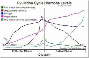 The Female Ovulation Cycle