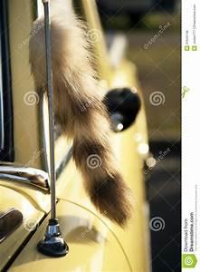 Queue De Poisson Voiture : queue de fox sur la voiture de vintage photo stock image 41643748 ~ Maxctalentgroup.com Avis de Voitures