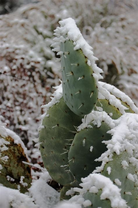 frozen cactus  saved learn     cactus