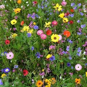 jachere fleurie multicolore grands espaces sac 25 kg With ou acheter un tapis champs de fleurs