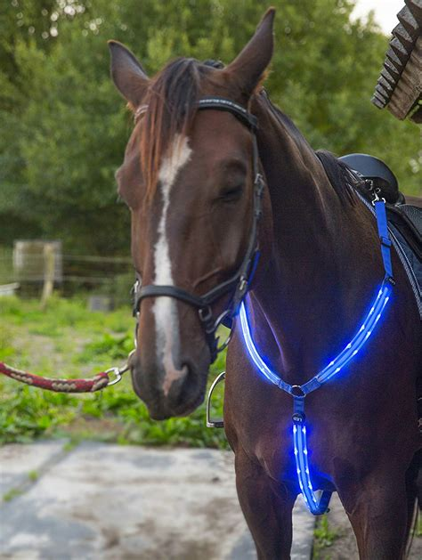 horse viz hi riding tack gear equestrian adjustable led collar seen sturdy visibility visible horseback comfortable safety makes