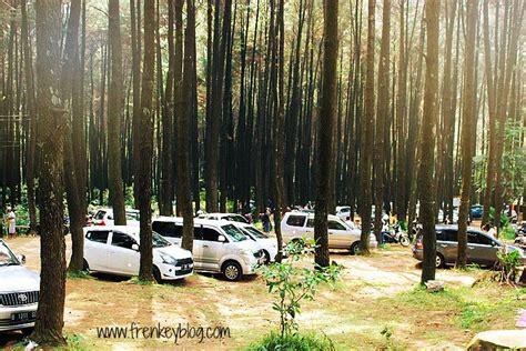 hutan pinus gunung pancar tempat piknik santai  bogor