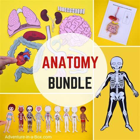 anatomy  kids printable bundle  studying human body