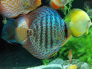Aquarium Design Group | And That's A Post