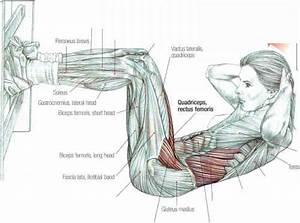 Gym Ladie Situps - Abdominal Muscles