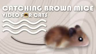 best cats for catching mice cat catching brown mice mouse for cats to