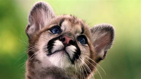 baby animal wallpapers wallpaper cave