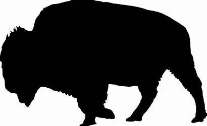 Bison Outline Clipart Clip Myreal