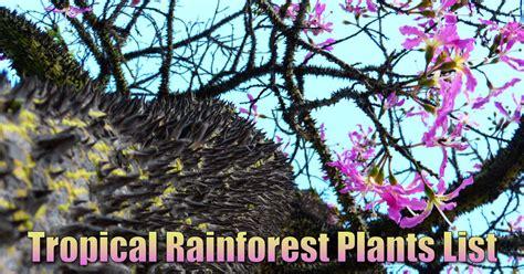 tropical rainforest plants list information pictures facts