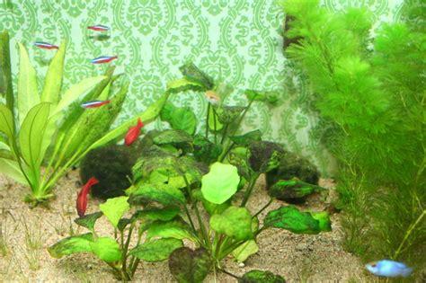 probl 232 me d algue sur mes plante