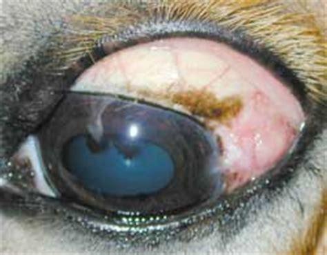 pferd lidproblem plattenepithelkarzinom