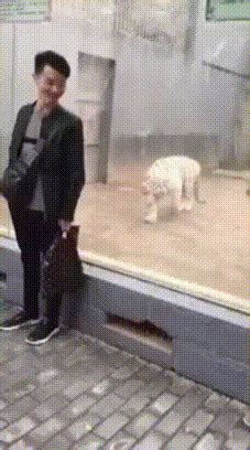 key   funny gif      unexpected