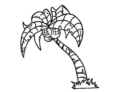 coconut palm tree coloring page coloringcrewcom