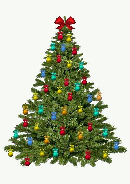 illustration christmas tree christmas fir