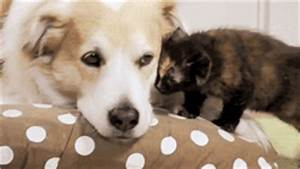 Pics For > Cat And Dog Love Gif