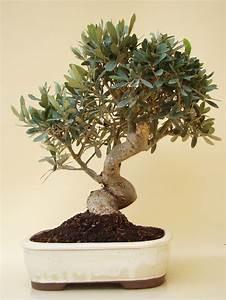 bonsai baumchen bonsai pflanzen pflege und tipps mein sch With feuerstelle garten mit künstliche bonsai bäumchen