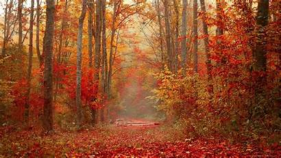 Autumn Forest Foliage Trees Background Colorful 1080p