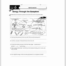 Energy Through The Ecosystem Worksheet For 3rd  8th Grade  Lesson Planet