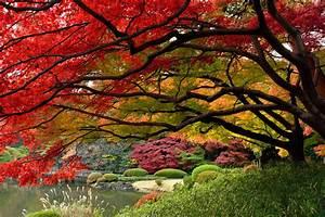 Foto: Giardino Giapponese di Valeria Del Treste #309328 Habitissimo
