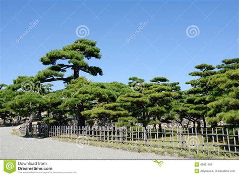 Japanischer Garten Kiefer by Japanischer Garten Mit Kiefern Stockbild Bild