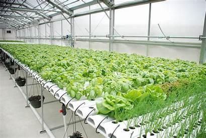 Hydroponics Hydroponic Gardening Introduction Farming Business Hydro