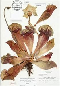 Herbaria and Herbarium Specimens