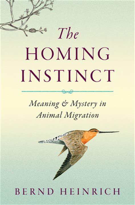 homing instinct meaning  mystery  animal