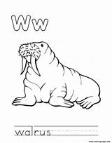 Coloring Walrus Animal Alphabet Pages Printable sketch template