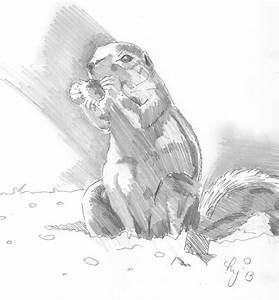 Prairie Dogs Drawing