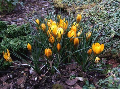 wann pflanzt tulpen eine wichtige frage f 252 r den floristen wann tulpen pflanzen