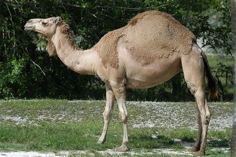 Category:Australian Animals Animals Wiki FANDOM