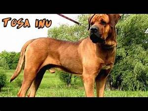 Top 10 Strongest Dogs in the World 🐕 - YouTube