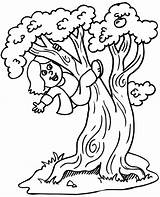 Coloring Climbing Tree 864px 05kb sketch template