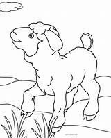 Sheep Coloring Pages Print Face Printable Cool2bkids sketch template