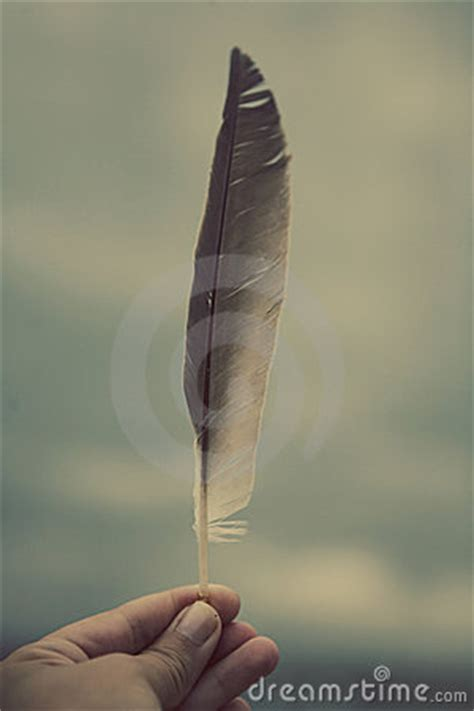 hand holding feather stock photography image