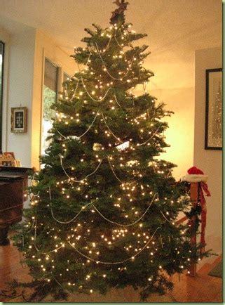 12 foot christmas tree costco northwest ladybug newsflash 7 8 foot trees are 39 99 at costco