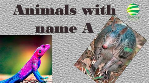 animals that start with the letter a animals for animals that start with a 29229