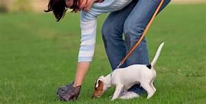 P.P.P* Pick up your pet's poop. | Discount Dog Poop Bags