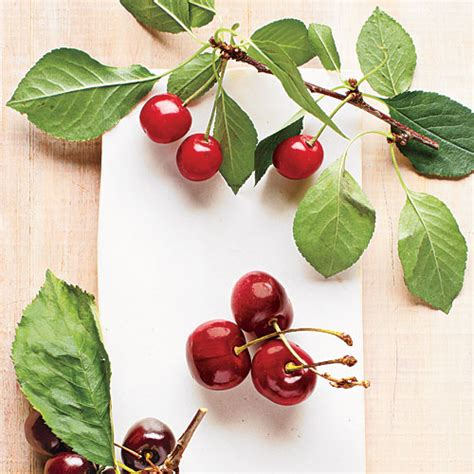 small cherry tree varieties 5 cherry varieties cooking light